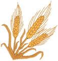 Wheat*