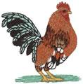 Sm. Bantam Rooster*