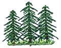 Three Evergreens*