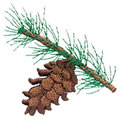 Pine Cone*
