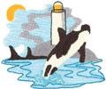 Orca Scene*