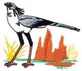 Secretary Bird*