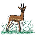 Gazelle*