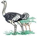 Ostrich*