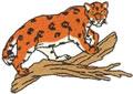 Sm. Jaguar