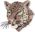 Leopard*