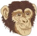Chimpanzee*