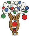 Reindeer*